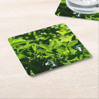 fresh spring, summer green leaves paper coaster. square paper coaster