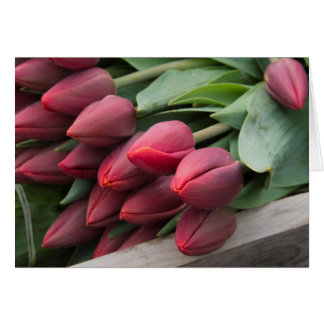 Fresh spring tulips card