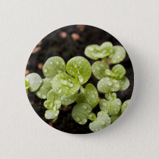 Fresh Sprouts Button