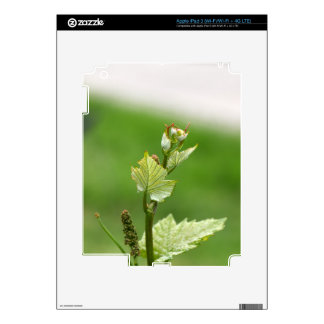 Fresh sprouts of grape vine decals for iPad 3