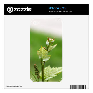 Fresh sprouts of grape vine iPhone 4 decal