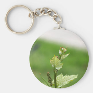 Fresh sprouts of grape vine keychain