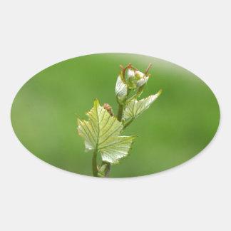 Fresh sprouts of grape vine oval sticker