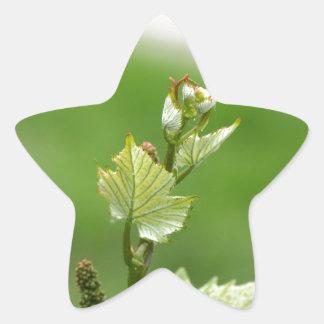 Fresh sprouts of grape vine star sticker