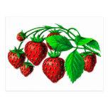 Fresh Strawberries Post Cards