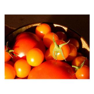 Fresh Tomatoes Postcard
