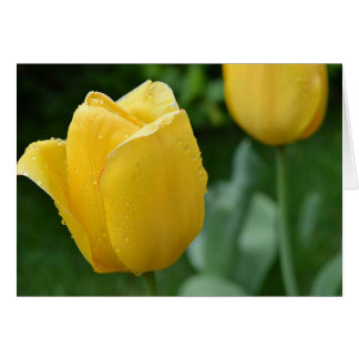~FReSH TuLiPS NoTeCaRD~ Stationery Note Card