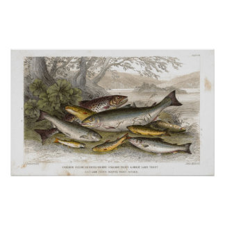 Fresh Water Fish Antique Lithographic print