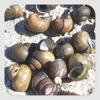 Fresh Water Snail Shells Square Sticker