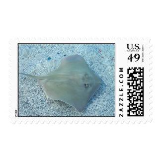 Fresh Water Stingray Postage Stamp