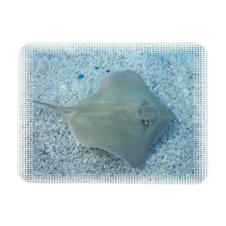 Fresh Water Stingray Premium Magnet
