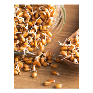 Fresh Wheat Berry Sprouts Letterhead