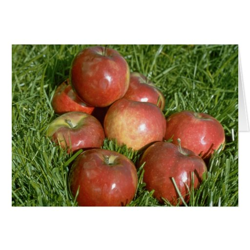 Freshly harvested apples, Nova Scotia, Canada Greeting Card