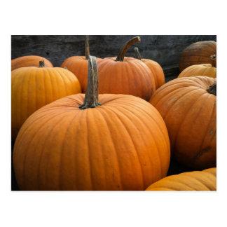 Freshly-Harvested Autumn Orange Pumpkins Postcard