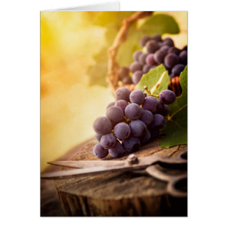 Freshly Harvested Grapes Card