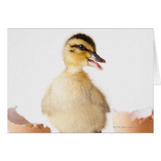 Freshly hatched chick beside broken egg shell card