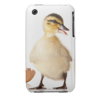 Freshly hatched chick beside broken egg shell iPhone 3 cover