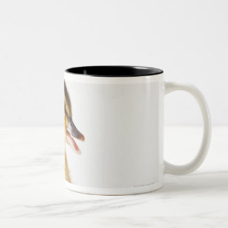 Freshly hatched chick beside broken egg shell Two-Tone coffee mug