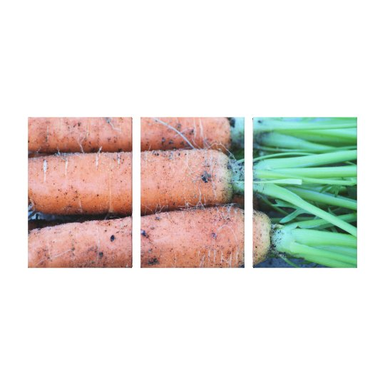 Freshly picked carrots 3 panel photo canvas