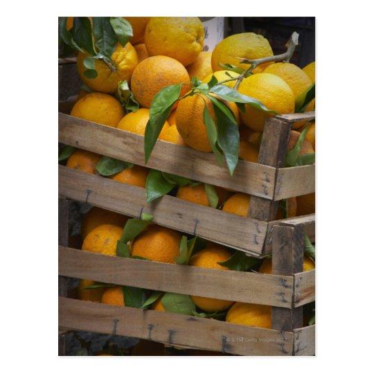 freshly picked oranges postcard