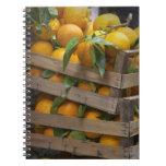 freshly picked oranges spiral note book