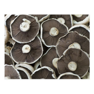 Freshly picked Portobello field mushrooms on Postcard