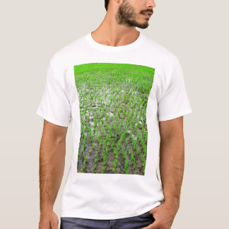 Freshly Planted Rice T-Shirt