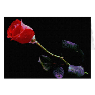 Freshly Watered Rose On Canvas Cards