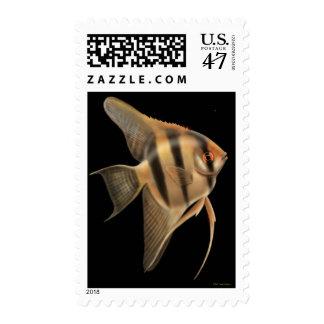 Freshwater Angelfish Postage