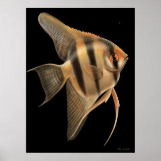 Freshwater Angelfish Poster