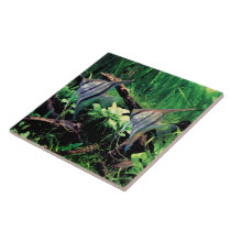 Freshwater Angelfish Tile