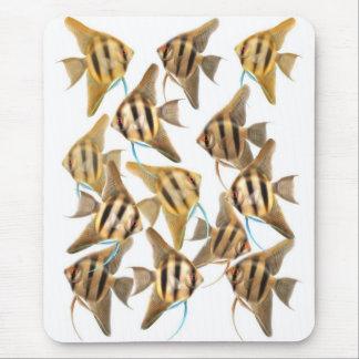 Freshwater Angelfishes Mousepad