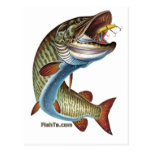 FreshWater Collection by FishTs.com Post Cards