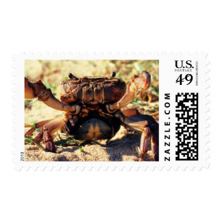 Freshwater Crab Observing, Durban Postage Stamp