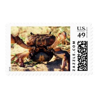 Freshwater Crab Observing, Durban Postage Stamp