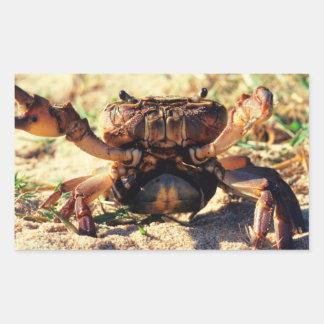 Freshwater Crab Observing, Durban Rectangular Sticker