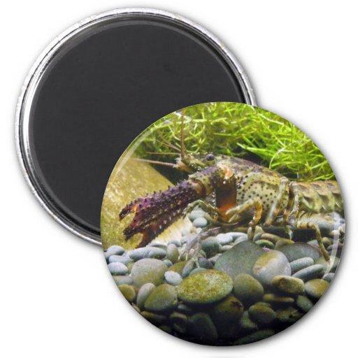 Freshwater crayfish 2 inch round magnet