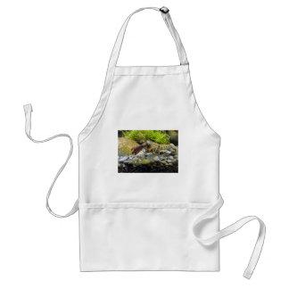 Freshwater crayfish adult apron