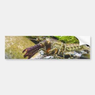 Freshwater crayfish bumper sticker