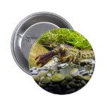 Freshwater crayfish button