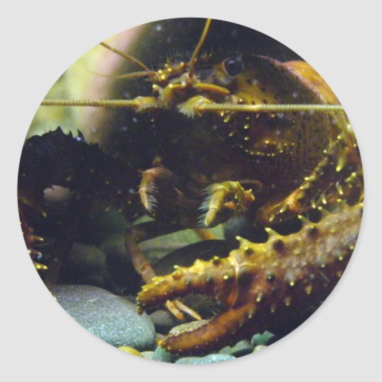 Freshwater crayfish classic round sticker