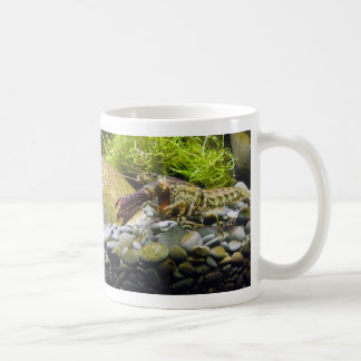 Freshwater crayfish coffee mug