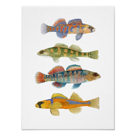 Freshwater Darter Art Poster