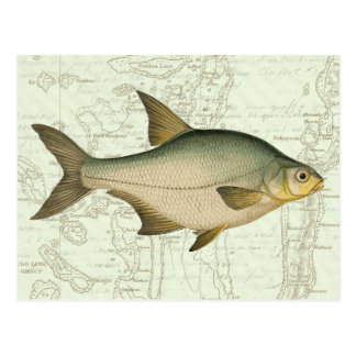 Freshwater Fish on Map Postcard