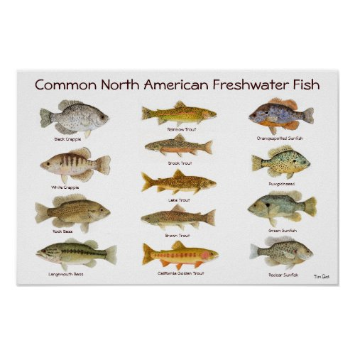 Life skills learning printable posters documento sin t tulo for Maryland freshwater fish
