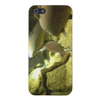 Freshwater Perch Fish iPhone Case Cover For iPhone 5