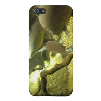 Freshwater Perch Fish iPhone Case