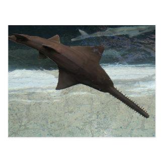 Freshwater Sawfish # 4 Postcard