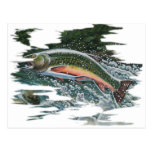 FreshWater Series by FishTs.com Post Cards