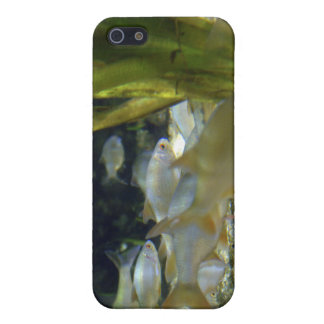 Freshwater Silver Fish iPhone Case